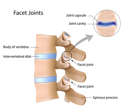 facet-joint