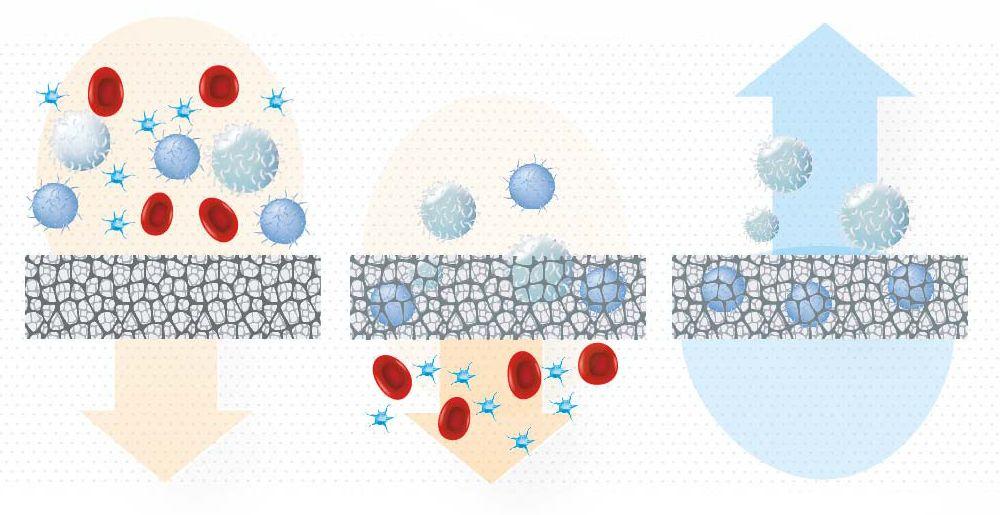 monocytes-brochure-2B
